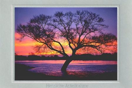 Weidenbaum im Morgenrot