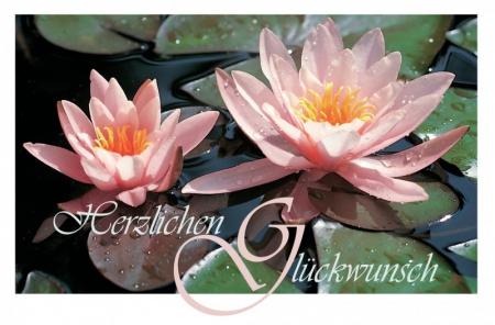 Zwei Seerosenblüten