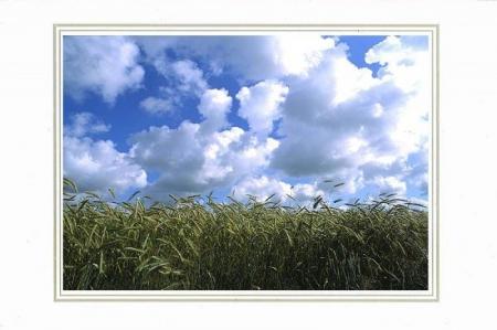 Wolken über Kornfeld