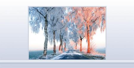 Winterliche Birkenallee
