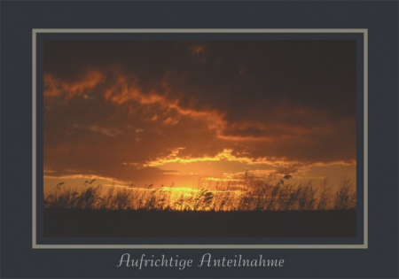 Sonnenuntergang am Hügel hinter Gräsern