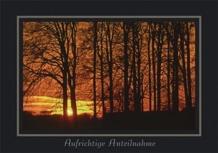 Sonnenuntergang am Buchenwald