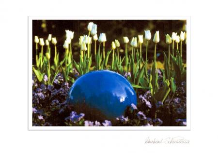 Weiße Tulpen mit blauer Kugel