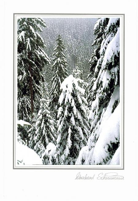 Schneetannenwald