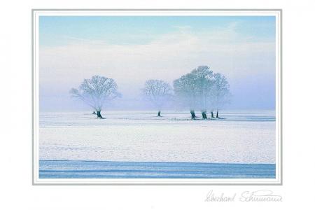 Eichengruppe im Winternebel