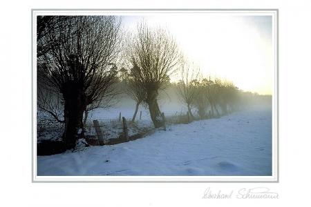 Weidenbäume im winterlichen Morgennebel