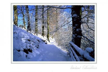 Waldweg am Schneehang