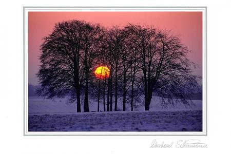 Winterabendstimmung am Wäldchen