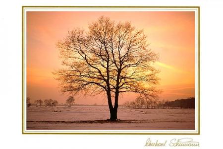 Baum im winterlichen Abendrot