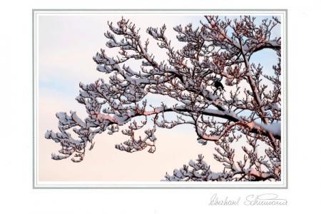 Schneebedeckte Zweige eines Magnolienbaumes