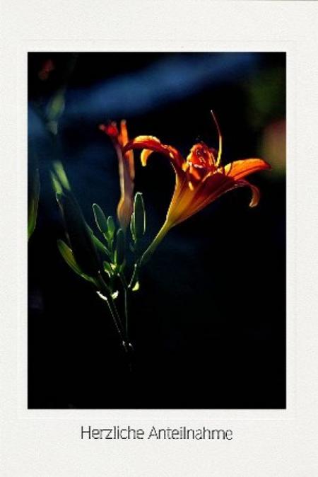 Taglilienblüten