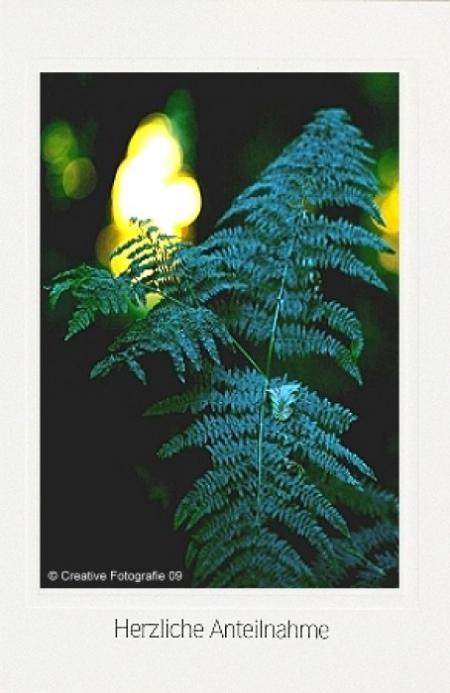 Waldfarnblätter am Abend