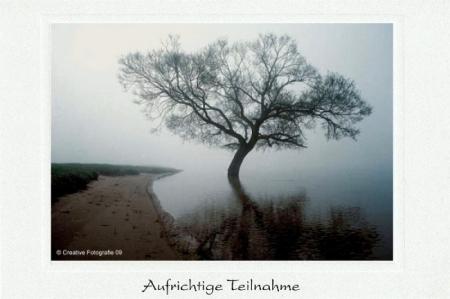 Weidenbaum im Morgennebel bei Hochwasser