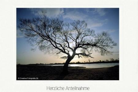 Weidenbaum am Fluß in Morgenstimmung