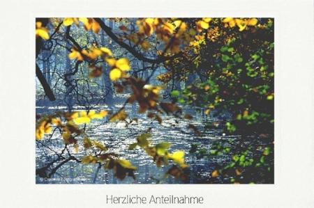 Waldteich im Herbst