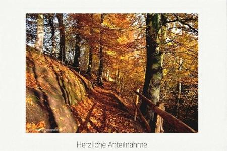 Waldweg am Hang im Herbst