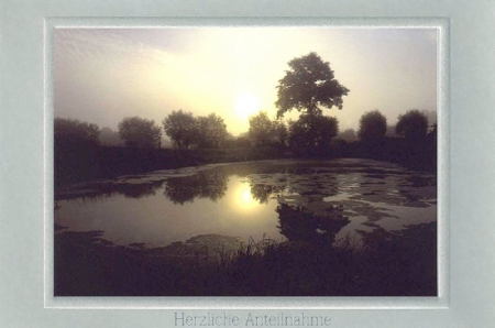 Morgenstimmung am Teich