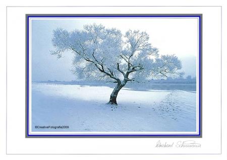 Winterlicher Weidenbaum am Fluss