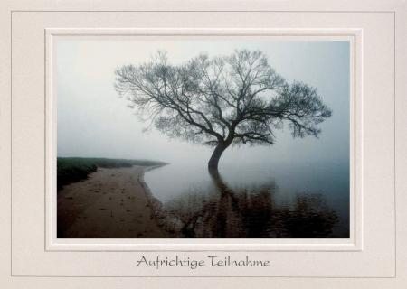 Weidenbaum im Morgennebel